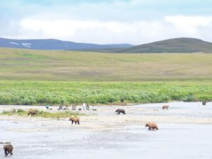 alaska-bear-viewing1